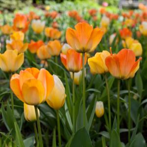 Užite si farby a vône jarných kvetov