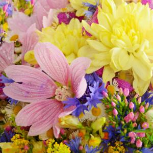 Rozkvitnuté leto je tu: aké kvety kúpiť a ako sa o nich starať
